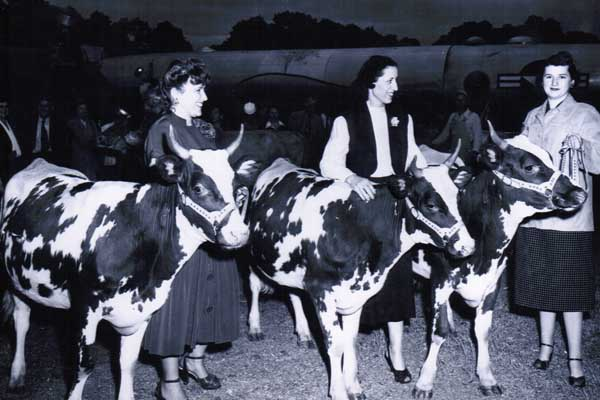 Betty at cow show
